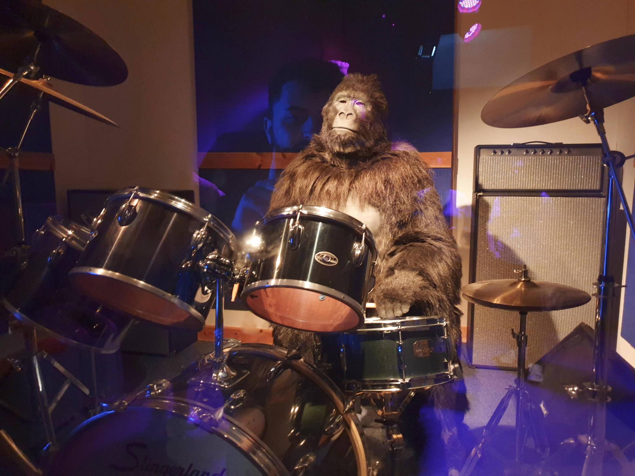 Cadbury's Gorilla playing drums